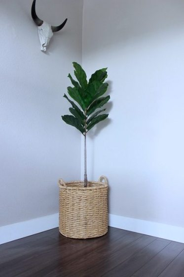 FIddle Leaf Fig Tree in Basket and Skull Antlers