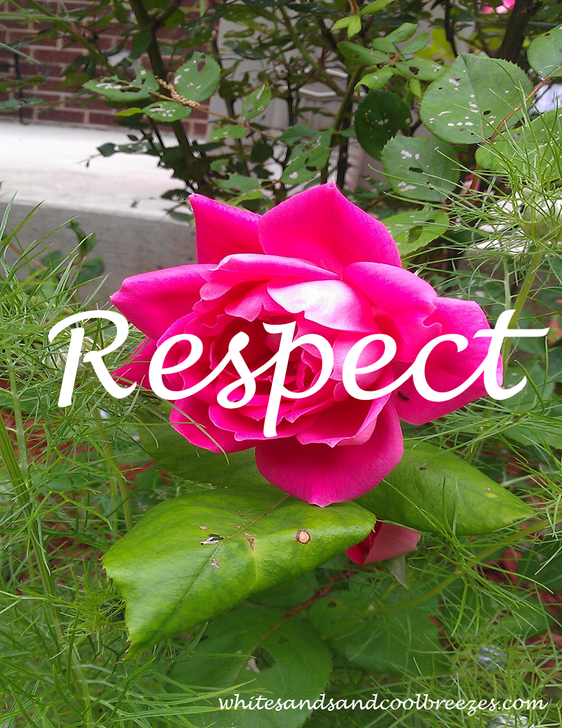 Respect - Thought for the Every Day