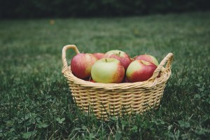Apple picking. 10 Fall things that make me Happy. What makes you happy in the fall?