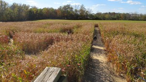 Corn Mazes. 5 exciting fall activities to do in SW Ohio.