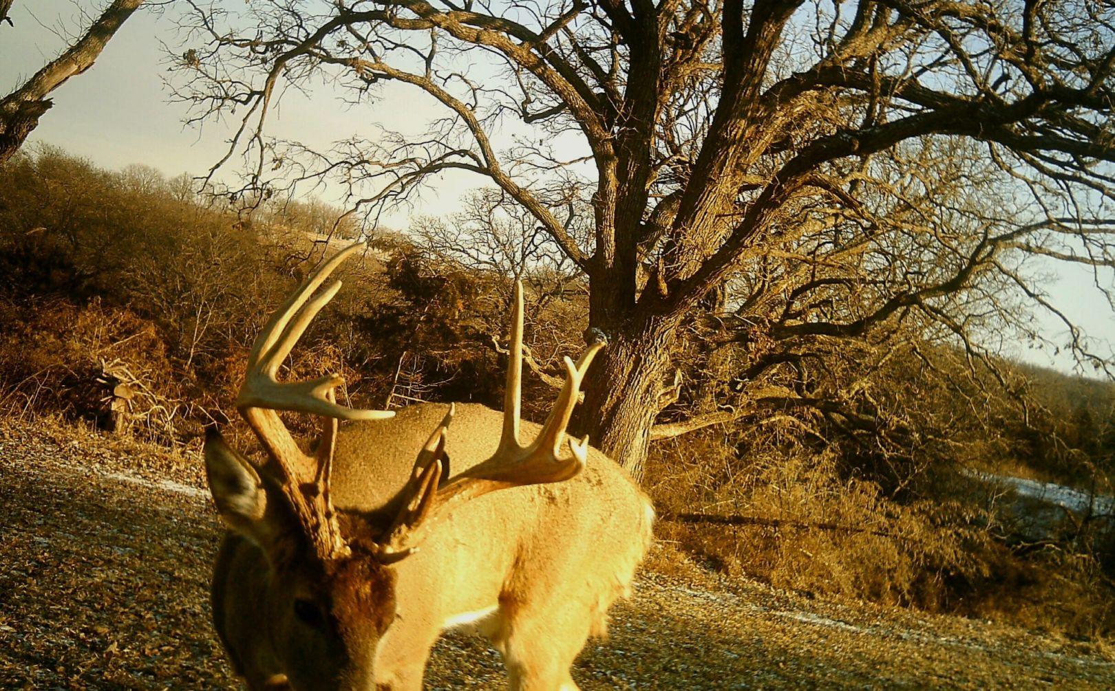Top 10 Deer Hunting Myths