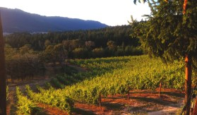 Whitetail Ridge Vineyards