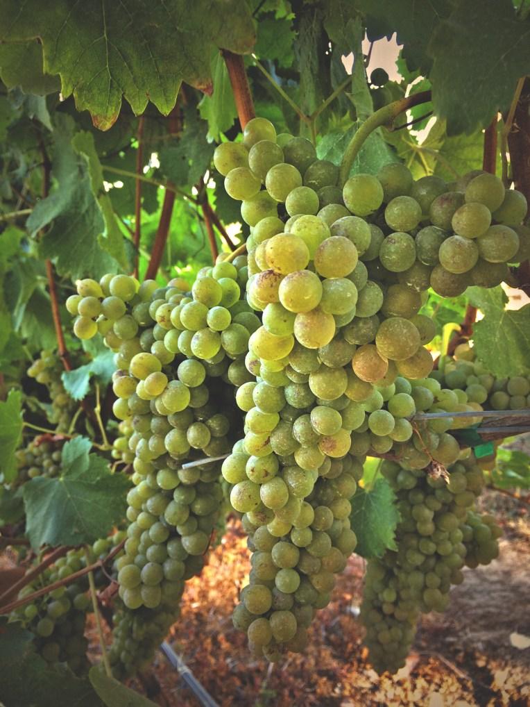 Whitetail Ridge Vineyard - PNW Wine