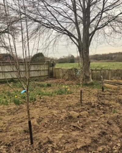 Newly planted fruit trees 240x300 - New Beginnings in the Garden