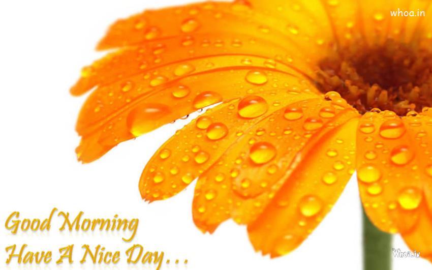 Good Morning Wallpaper Download Beautiful Gud Morning New