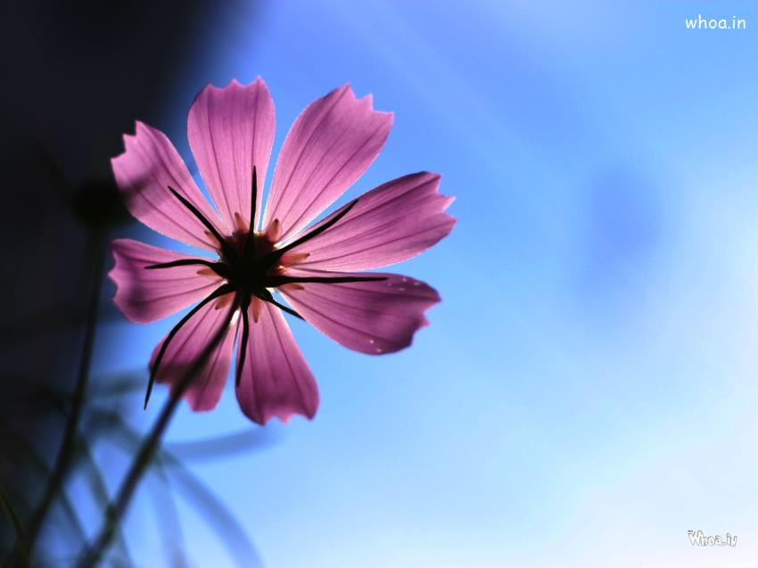 Natural Flower Wallpaper HD