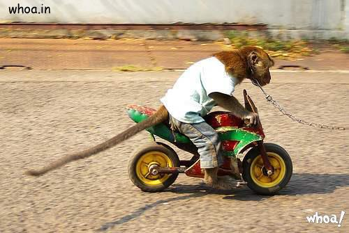 Funny Monkey Ride On The Byke Photo For Facebook Fun Free