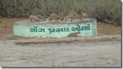 Foxes Eating Prasad @ Black Hills of Kutch (Karo Dungar)