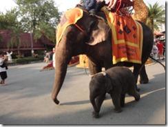Elephant ride at Noong Nooch Village