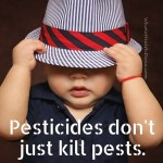 Glyphosate also known as round up is a toxic chemicalhellip