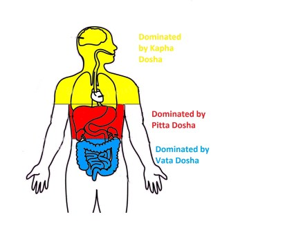 body parts dominated by the 3 doshas