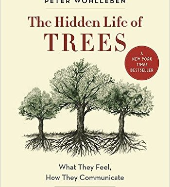 Hidden Life of Trees: book review