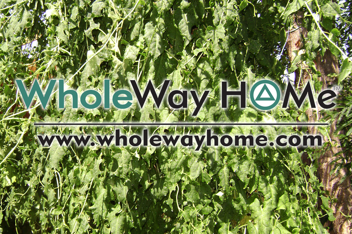 WholeWay Home 1 Traditional Chinese Medicine (TCM) Herbs