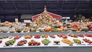 National Heirloom Festival tower of organic squash!