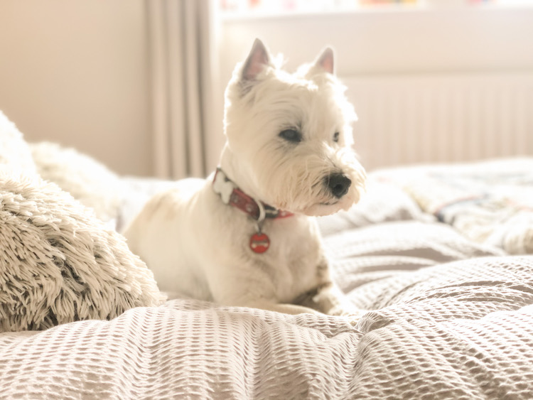 fine bedding co comforter