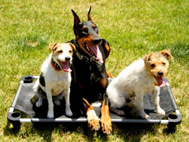 Place board obedience dog and puppy training