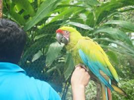 Solche Papageie kenne ich sonst nur aus dem Fernsehen.