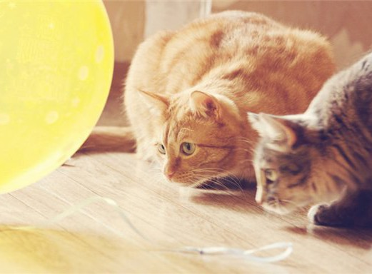 7 Ways To Entertain Your Cats Without Spending Money