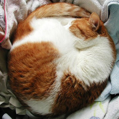 Cute Cat Monday A Symphony Of Round