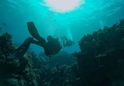 scuba diving in the red sea by Benedikt Kuhn
