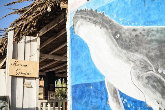 Graffiti at the Marine Garden Camp & Cafe by Ayman Salah