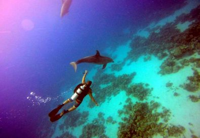 Dolphins swim past divers at Eliphinstone Reef by Adham Fahmy