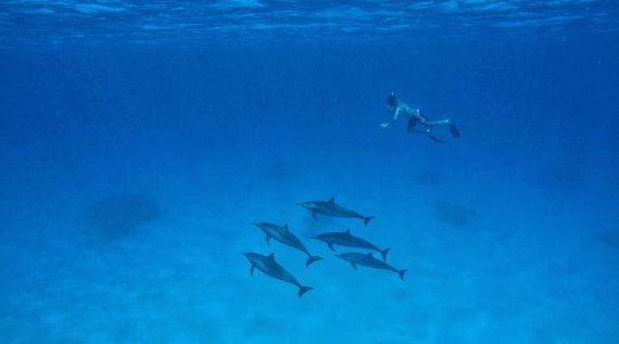 Sataya Dolphin Reef by Youssef El-Rifai