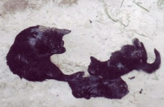 mama-and-kittens1