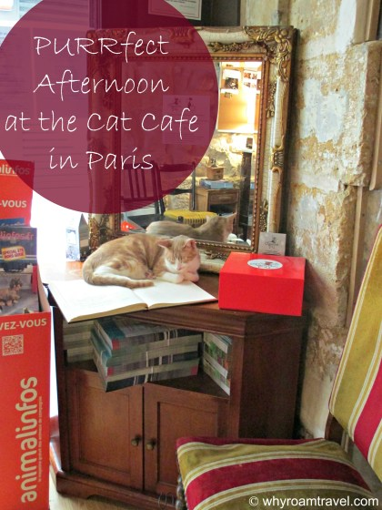 PURRfect afternoon at the cat cafe in Paris | www.whyroamtravel.com
