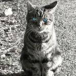 Contemptuous cat
