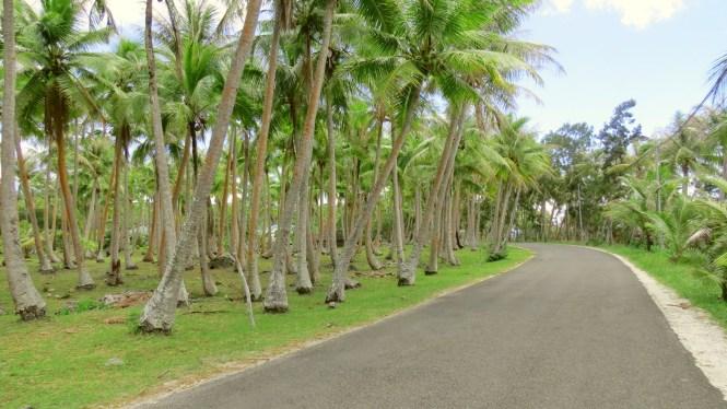 Coconut lines pathways - Mare