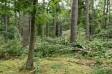 Tornado Damage Front Yard