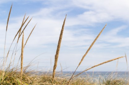 Tall Grass in the Dunes