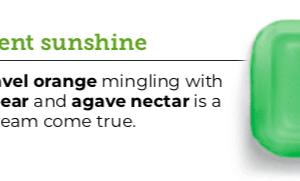Succulent Sunshine Scentsy Wax Bar.