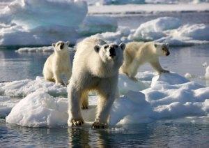 BBC's Frozen Planet - Polar Bears