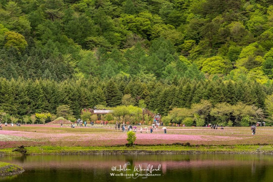 Shiba-sakura Festival, Fuji Five Lakes