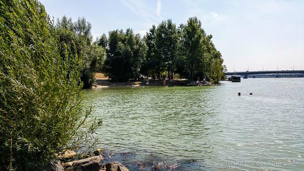 Donauinsel Hundebaden August 2015 (10 von 11)