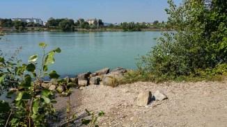 Donauinsel Hundebaden August 2015 (4 von 11)