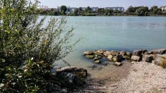 Donauinsel Hundebaden August 2015 (7 von 11)