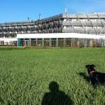 Workout, Wandern und Wellness: Mit Hund im Mühlviertel