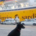Fähre mit Hund: Sardinien. Alle Fragen und Antworten.
