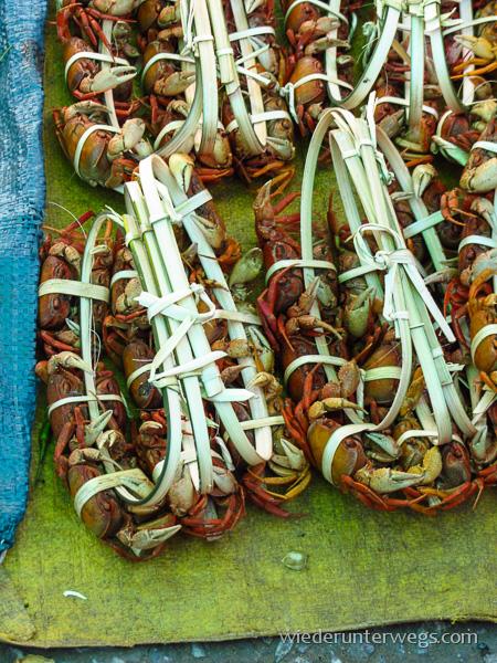 Krabben kokettt verknotet