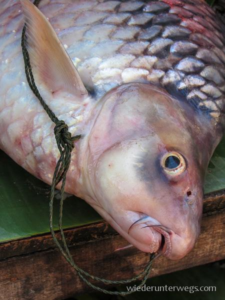 Fisch. Kennen wir auch.