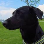 Coffee unterwegs: Hundefreundlich im Waldviertel