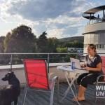 Klagenfurt ganz easy mit Hund: Das AllYouNeed Hotel