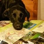 [7 Ways 2 Travel] Warum ich gerne Urlaub mit Hund mache.