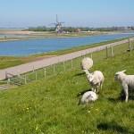Slow Travel auf Texel: Von Hunden, Schafen, Deichen und Dünen.
