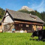 Urlaub auf dem Bauernhof: Freiheit für Coffee und viel Ruhe für uns.