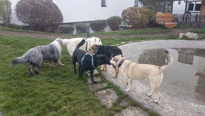 Hunde im Garten