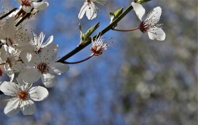 Drzewka i krzewy owocowe - Sklep internetowy